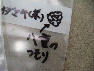 オダマキタネ2.JPG