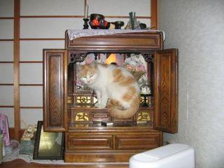 仏壇に猫.JPG