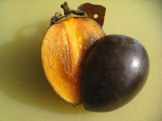 黒柿4.JPG